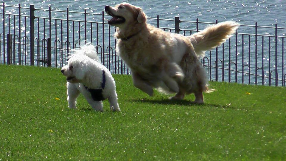Psí a kočičí blechy: jak na ně