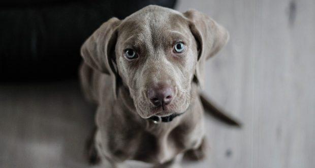 Co je to zátěžové krmivo a pro jakého psa je vhodné?