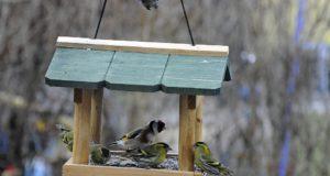 Jak správně krmit ptáky v zimě?