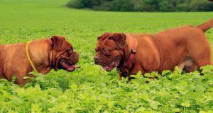 Jaká pořídit zvířata při alergii?