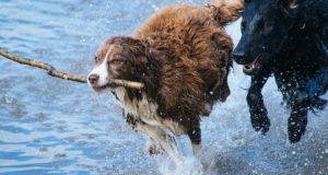 I u starších psů má výcvik smysl