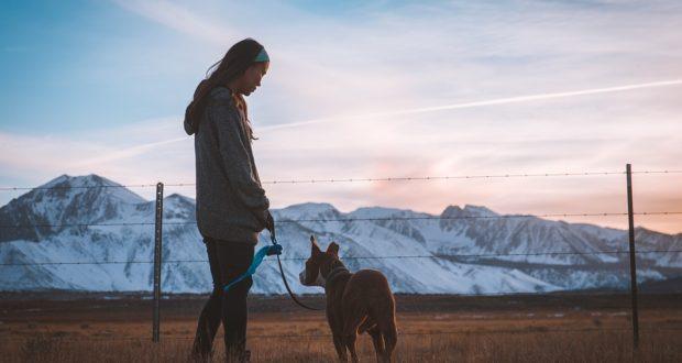Chovatelské potřeby pro psa
