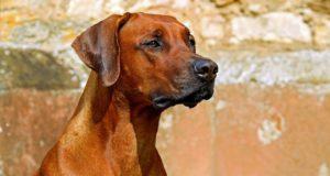 Kousnutí od psa: jak tomu předejít?