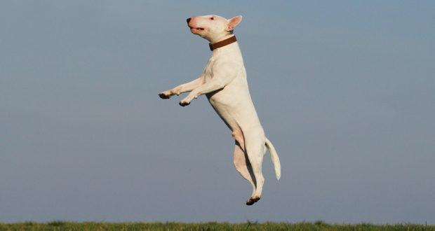 Hry, které budou bavit vás i vašeho psího mazlíčka