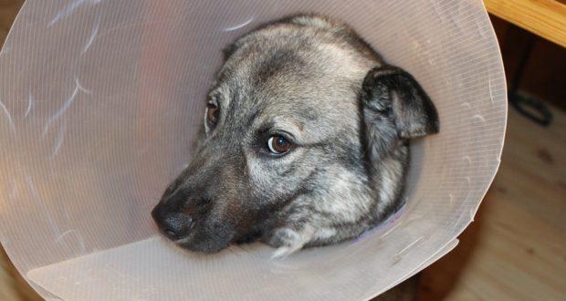 Obraťte se na svého veterináře, pokud má váš pes tyto příznaky
