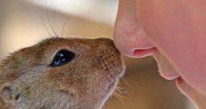 Majitelé domácích zvířat bývají zdravější než ti, kteří je nemají