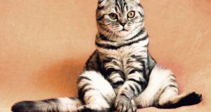 Důvody, proč s kočkou navštívit veterináře