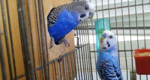 Zdravá strava pro zdravé ptáky