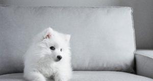 Jak pečovat o psa malého vzrůstu?