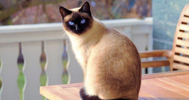 Normální stárnutí a očekávané změny u starších koček