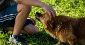 Nejčastější chyby při výcviku psů