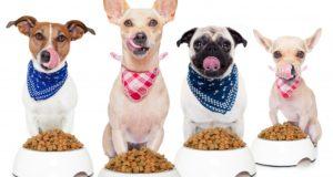 Výhody antioxidantů pro psy