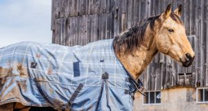 Jak správně vybrat deku pro koně?